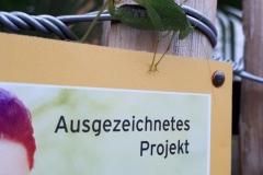 Vierpunktige Sichelschrecke (Phaneroptera nana)